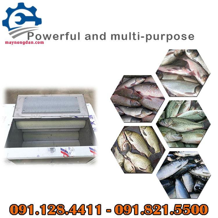 Thiết bị đánh vảy cá thích hợp cho nhiều loại cá khác nhau