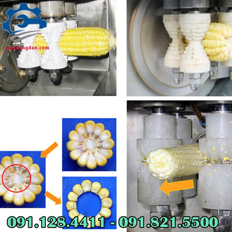 Qúa trình cắt tách hạt ngô của máy tách hạt bắp tươi công nghiệp